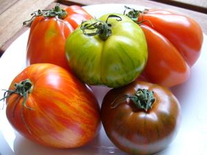 Tomates_multicolores